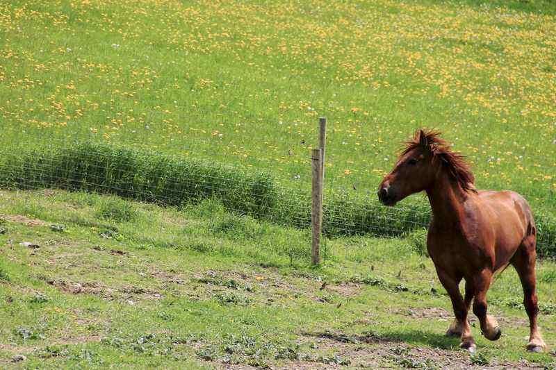 Horse at Merck Forest & Farmland Center