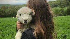 Finn the lamb at Merck Forest & Farmland Center